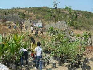 planting the fruit trees 300x225 How You Can Help