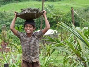 Picture of carrying the dung for the kitchen garden