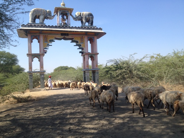 Sheep herder under elephant gate India